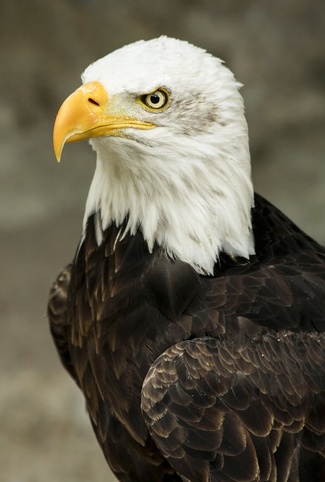 Six Ways Homeowner in Brighton and Hove Can Spot a Legal Eagle From a Tired Turkey