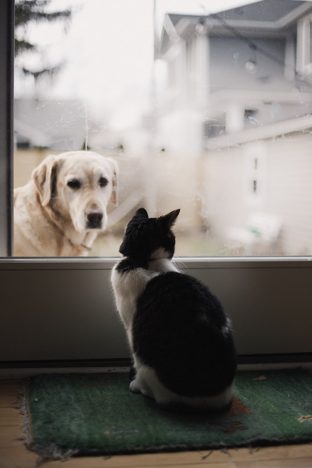 How the pets of Brighton and Hove are helping people in lockdown