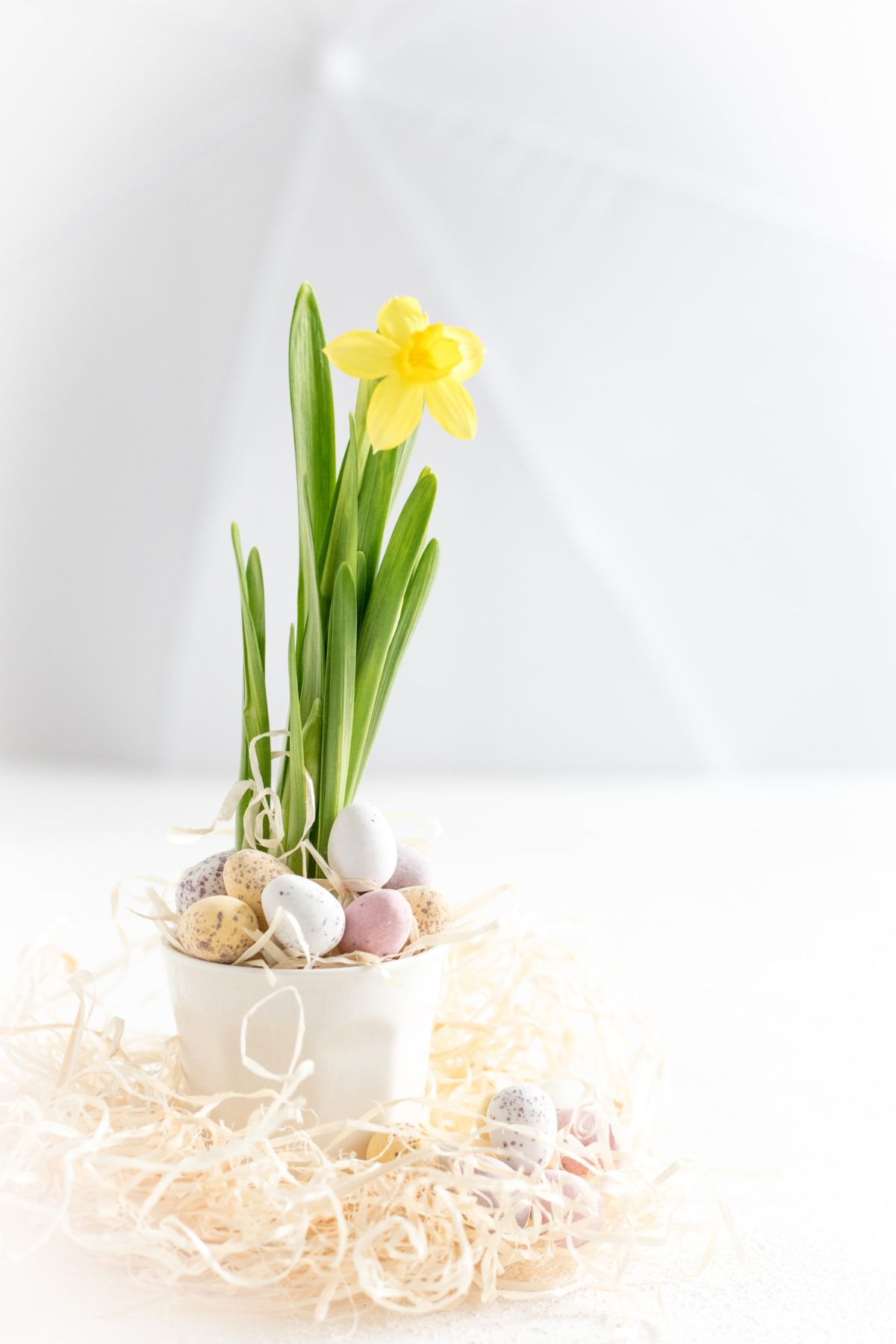 Six Spring Cleaning Tips ForBrighton and HoveLandlords